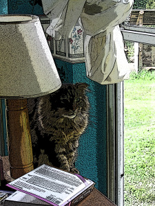 Kinky, our old Manx Tom. Our buddy. Photo by Lenee Cobb